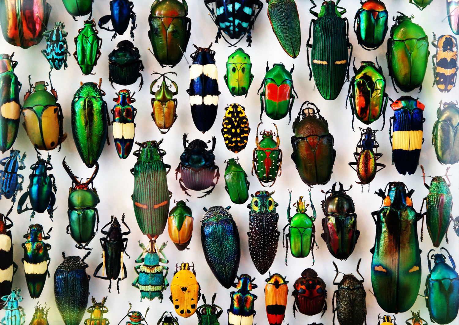 In Defense Of Biodiversity Why Protecting Species From