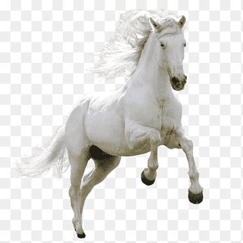 Running Horse White Horse Png Pngegg