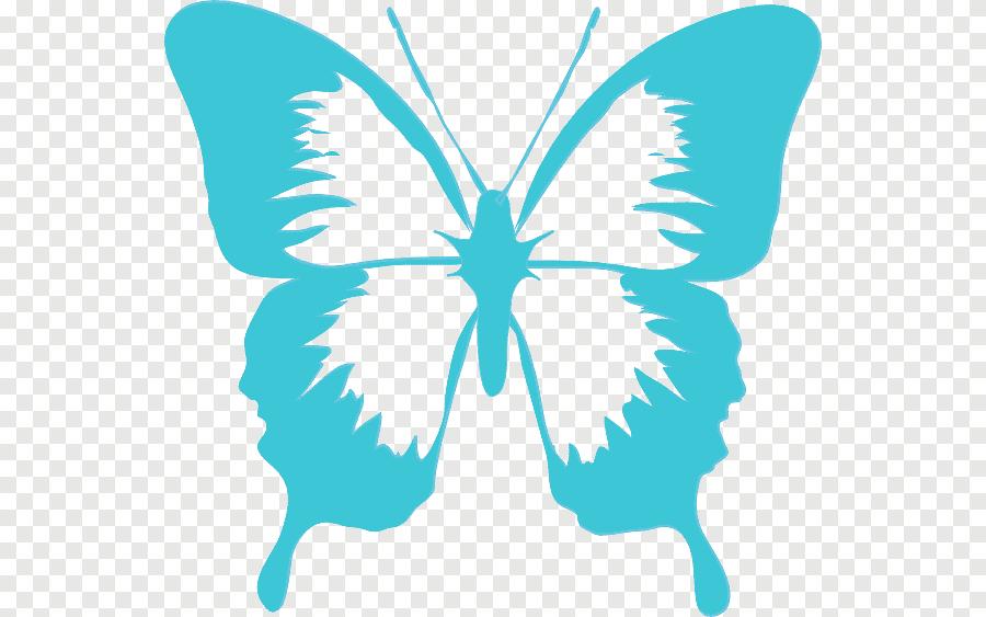 papillon noir et blanc papillon