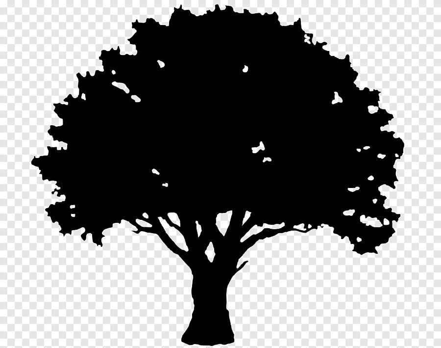 English Oak Tree Silhouette Hole Leaf Branch Png Pngegg