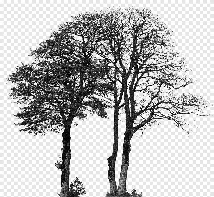 Silhouette Drawing Tree Silhouette Musim Dingin Hewan Png Pngegg