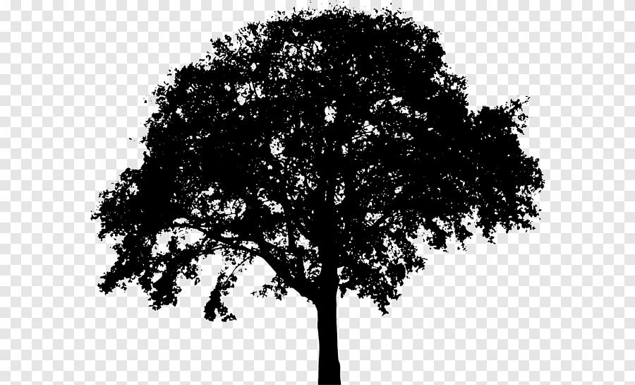 Silhouette Tree Silhouette Hewan Daun Png Pngegg