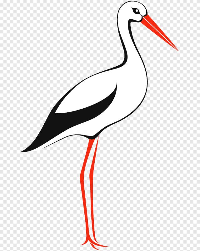 Cigogne blanche i, Oiseau, animaux, libres de droits png  PNGEgg