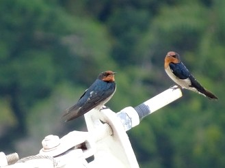 Cute birds up in the mountain
