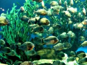 Stopover in KL; D.I.Y. Malaysia; Aquaria KLCC; D.I.Y. Kuala Lumpur