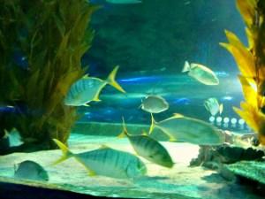 Stopover in KL; D.I.Y. Malaysia; Aquaria KLCC