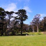 Enjoying Spring at the Golden Gate Park