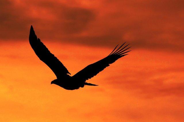 Eagle Crusher Company Updates - July 2020