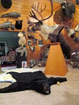 One of the houses we were invited over to for dinner - the father was a taxidermist. We had just a wee bit of fun in that room!