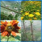 composit 1 flowers Eaglemount 2014