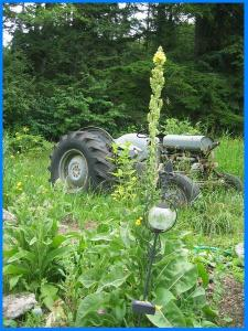 farm tractor with mullein