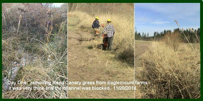 start composite Salmon recovery farm chimacum creek 11-19-2014