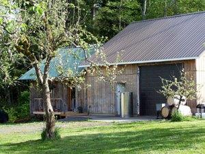 Our apple trees near Eaglemount tasting room