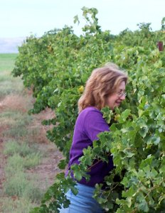 Trudy Davis in the vineyards of eastern Washington