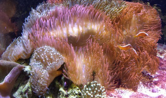 sealife in aquarium
