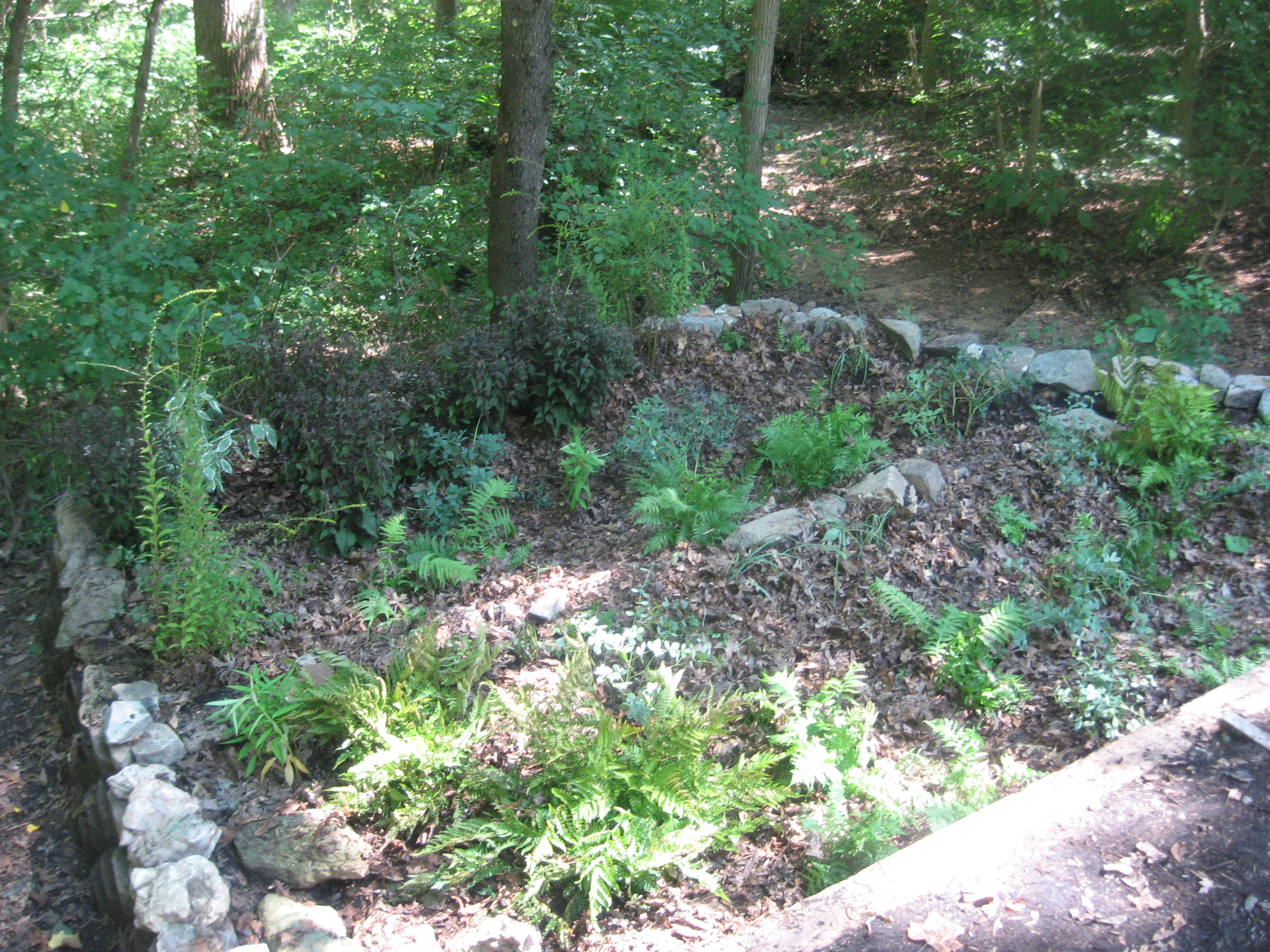 This eagle project entailed the building of two, 6'x17' rain gardens, one flowing into the next in order to filter runoff before reaching a nearby river. The gardens consisted of a concrete retaining wall, and over 100 native plant species. The project took a total of 255 hours to complete over a two-month period.
