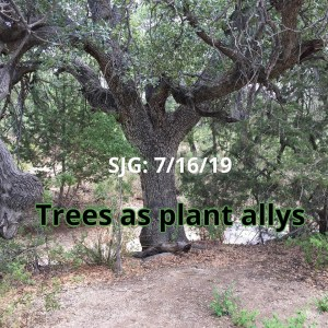 2019-07-16 - Trees as plant allys