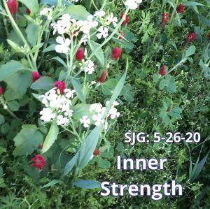 2020-05-26 - Inner Strength