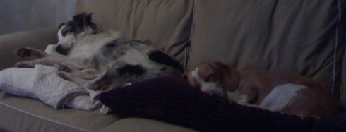 My dogs Daedalus and Willow lying on the couch after a long day at the park