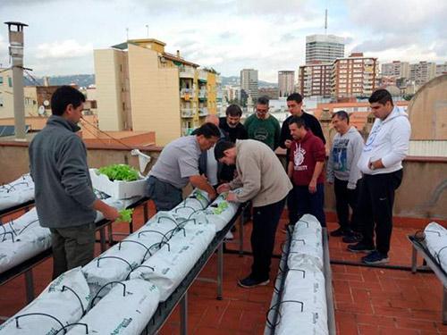 Persones treballant al projecte Hort al Terrat en un terrat de la ciutat de Barcelona