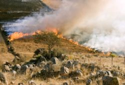 grass-fire-807388_1280-web