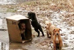 4 dumpster pups