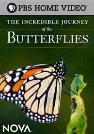 The Incredible Journey of the Butterflies produced by PBS