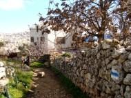 D.Peschel - Israeli 'tourist path' on Tel Rumeida hill - Hebron - 281214