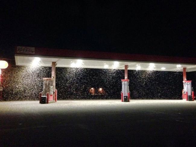 Massive Amount Of Mayflies Swarm In Wisconsin
