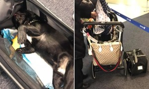 United Airlines Flight Attendant Forces Dog In Overhead Compartment & Dog Dies