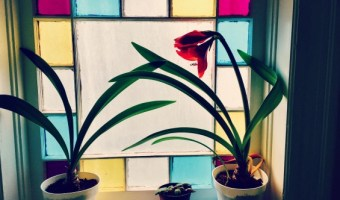Snapshot of Truth: Late Bloomer