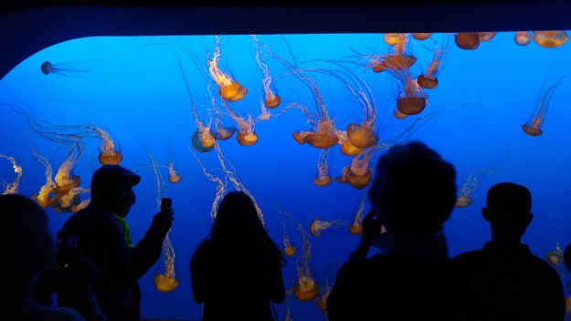 Wall of Luminescent Jellyfish at Monterey