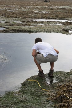 Gabe exploring a tide pool for his research team