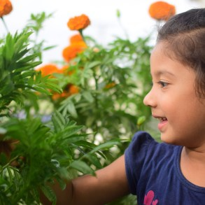 Young girl standing in tall orange flowers