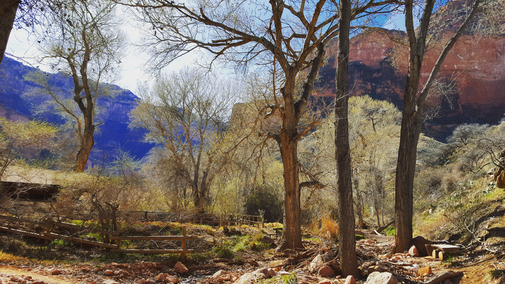 Indian Garden, Grand Canyon National Park, in February