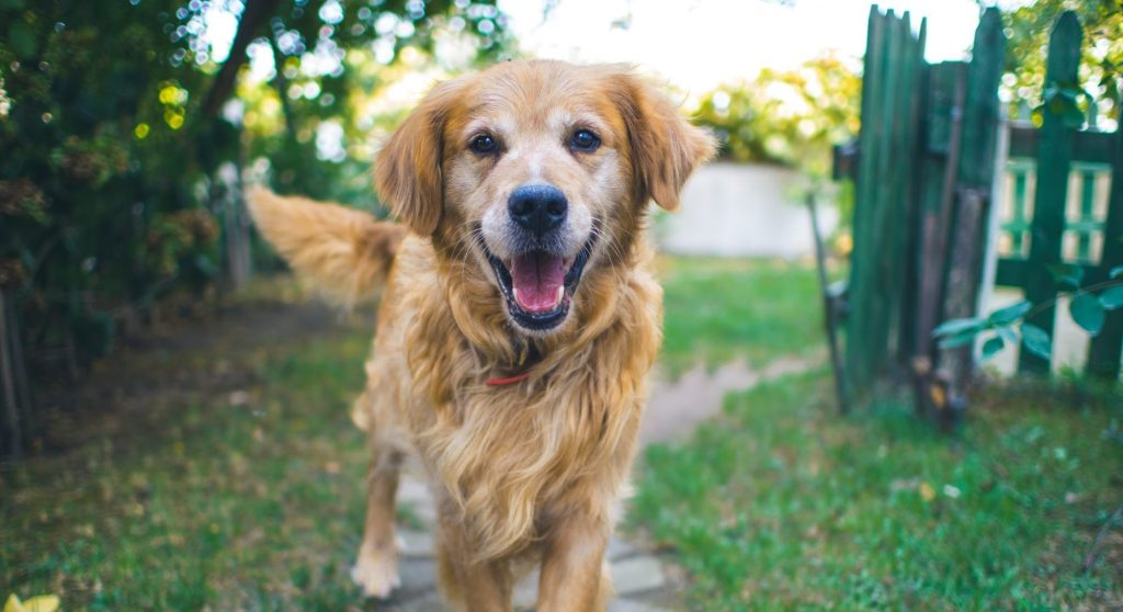 Surprising Benefits of Owning a Dog