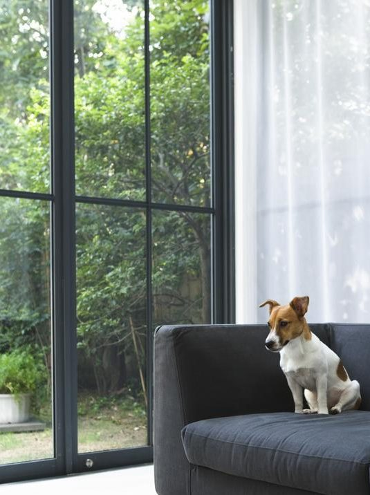 outdoor space for good mental health dog at window