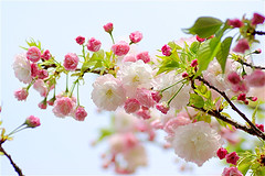 pink and white branch of flowers