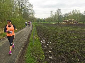 Spreewaldmarathon 2016 Lübbenau Kühe