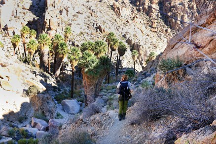 Lost Palms Oasis Canyon