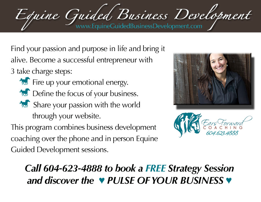 Business Coaching inspried by Equine Guided Development Sessions.