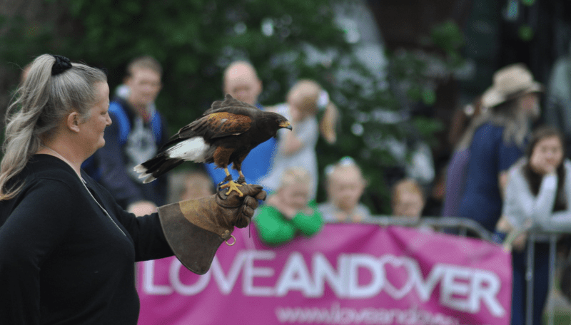 A bird of prey at an event organised by Love Andover