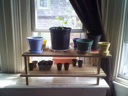 pots with plants inside