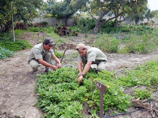 gardeners maintaining local plants