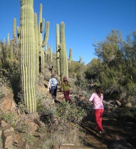 kids hiking, Saguaro cacti