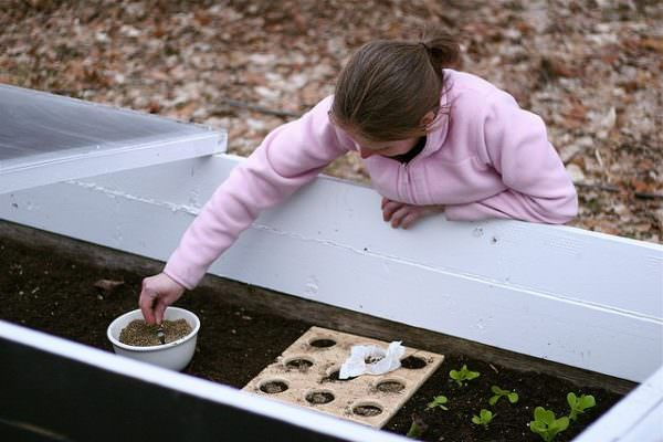 Working in the Cold Frame