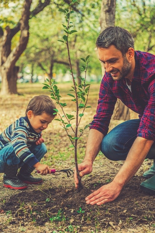 What's more eco friendly than a tree? Consider planting one for Father's Day that he will enjoy for years to come.