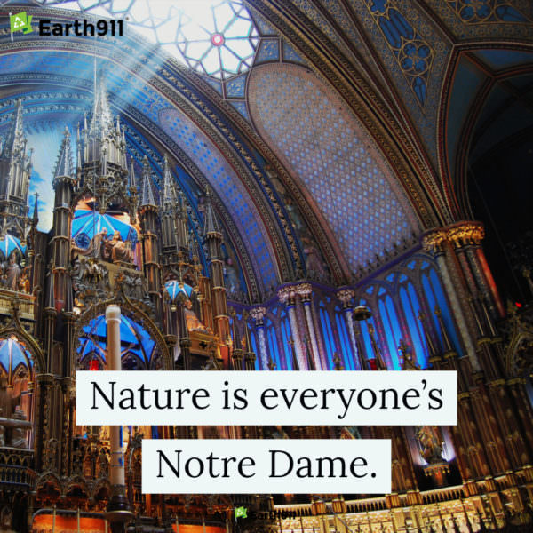 Nature is everyone's Notre Dame.
