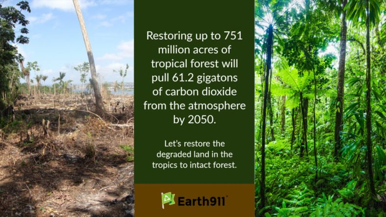 Restoring forests will remove CO2 from the atmosphere