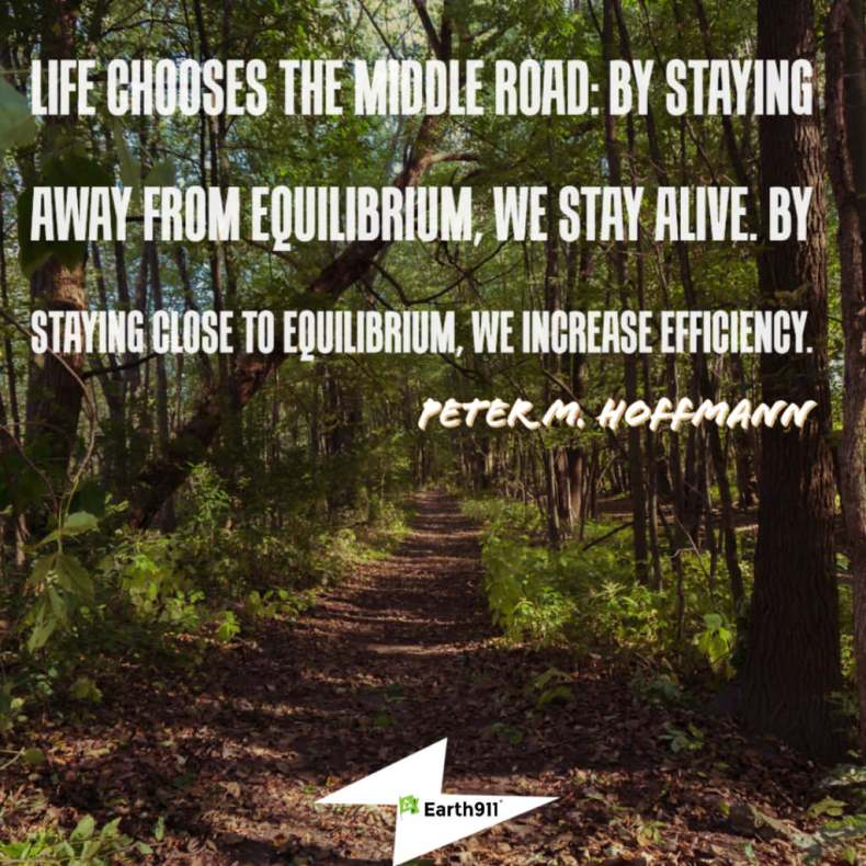 """Life chooses the middle road ..."" Peter M. Hoffmann"